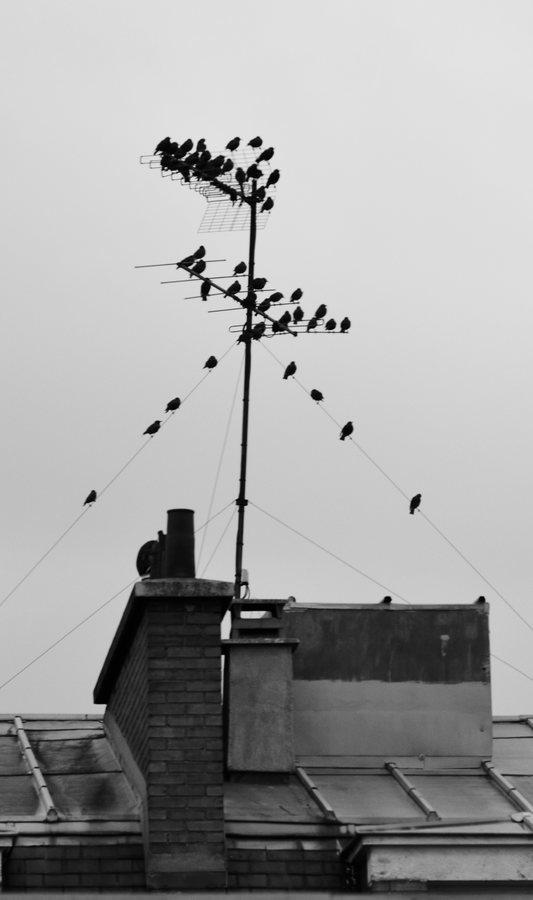 Migration radiophonique